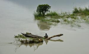 印度西部暴雨引发洪水:已致41人死亡,上万人紧急疏散