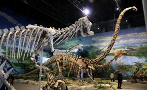 自贡恐龙博物馆馆长万一做客澎湃问吧,聊聊关于恐龙的那些事