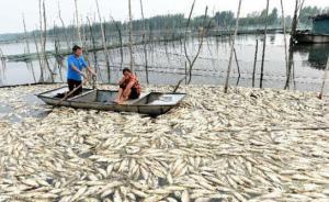 安徽跨界水体污染事件启动问责:上游宿州承诺补助1600万