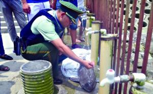 比大熊猫还少的江豚又死一条:多处受伤,死在长江口船舶密集