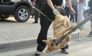 四川清江镇:未免疫、不拴养的狗一律捕杀,费用由犬主人承担