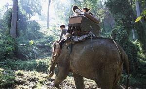 泰国大象发疯用象牙捅死饲养员,驮着3名中国游客钻入森林
