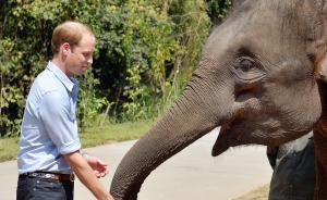 英王室成员中国电视首秀,威廉王子学中文倡议保护野生动物