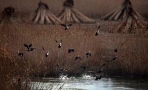 长江中游70%湿地消失,专家建议将保护工作纳入政绩考核