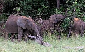 12家中国林企在非洲承诺保护野生动物,史上首次