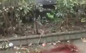 上海一国际高中女生高坠身亡,室友称其从宿舍外空调架上失足