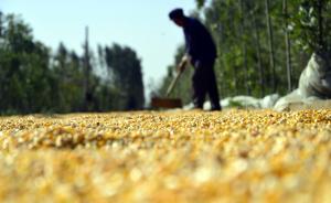 湖北八千万粮补被冒领:荒地也能领补贴,多干部参与千人受处