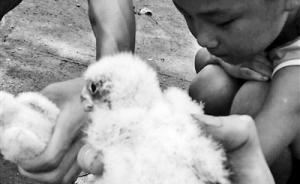 官方回应学生抓16只鸟获刑十年:其此前就非法买卖保护动物