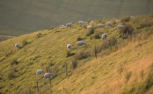 某地为展示扶贫成绩派学生披白塑料趴在山坡,领导远看全是羊