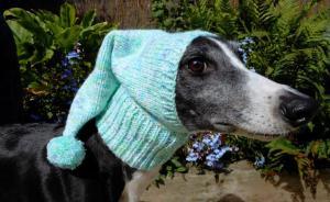 当你担心狗狗冬天会冷的时候,她已经给狗织了300件毛衣了