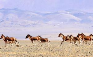 """野生动物保护法时隔26年大修,""""国保""""名录拟5年评估一次"""