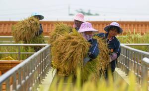 中科院报告:中国转基因作物产业化停滞,比巴西印度落后