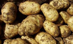 农业部:将马铃薯作为主粮,到2020年种植面积超过1亿亩