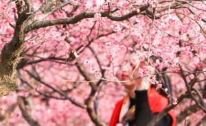 上海首推花期预报:桃花、樱花、牡丹、油菜花等将进入盛花期