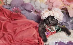 人不如猫系列:当猫咪变身珠光宝气的白富美