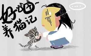 好喵漫画 | 好喵养猫记(上)