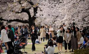 50万中国客赴日赏樱人均花2万,日高官称考虑将对中国免签