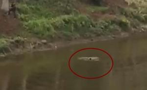 四川泸县一男子行窃被追跳河溺亡,百人围观无人施救