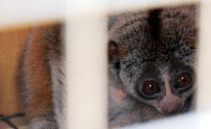 二审修订社会反响寥寥,最终将诞生怎样一部野生动物保护法?