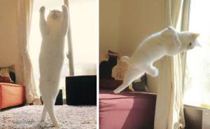 趣看|猫咪化身灵魂舞者跳起芭蕾,看宠物如何优雅成精