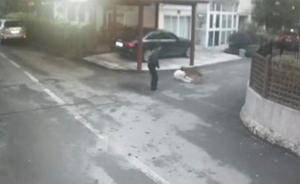 上海一男子因狗咬狗与两同伴打伤老人,三人因寻衅滋事获刑
