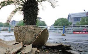大风刮落花盆砸死2岁男童,宁波一屋主涉过失杀人被刑拘