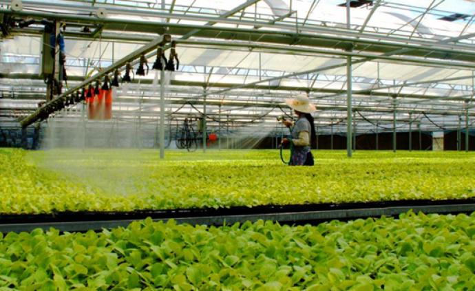 鹽城發揮農業大市的優勢,持續接軌上海,融入長三角一體化