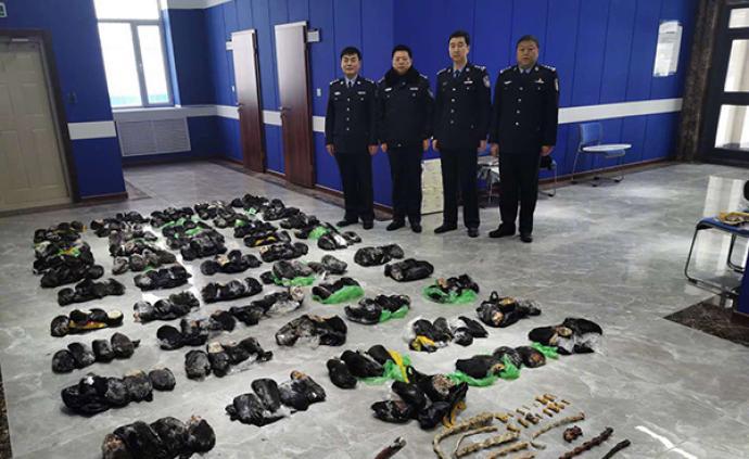 黑龍江警方破獲走私出售珍貴野生動物案,查獲熊掌214只