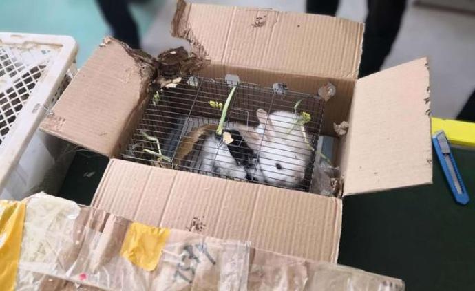 被禁止寄遞的活體動物,咋就進了包裹?活物寄遞有什么風險?