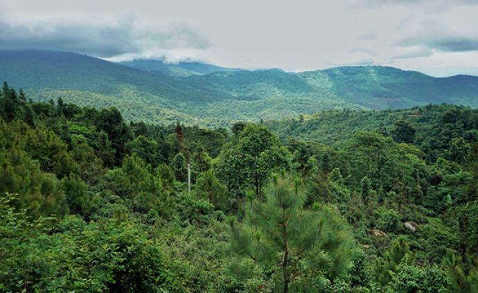 國家林業和草原局:2019年全國完成造林1.06億畝