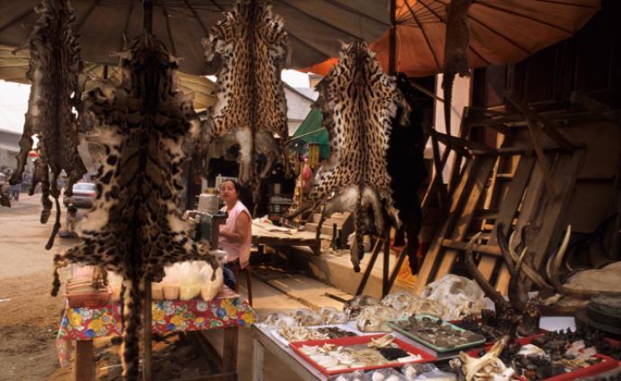 野生動物保護專家呼吁:全球禁止野生動物貿易,守護健康家園