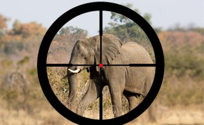 博茨瓦纳为猎象开绿灯,为何非洲不禁止这项血腥的旅游产业?