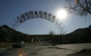 八达岭野生动物园回应老虎咬人调查结果:暂停猛兽区自驾游览