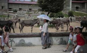 """朝鲜平壤动物园里啥模样?""""狗屋""""是最热门景点"""