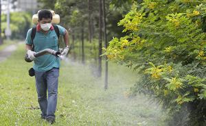 新加坡82人感染寨卡病毒多国发警示,国内旅行社暂照常发团