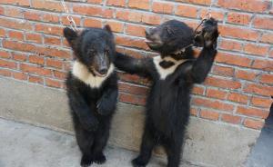 """动保组织称""""马戏团虐黑熊视频""""是宿州非苏州,宿州:已清理"""