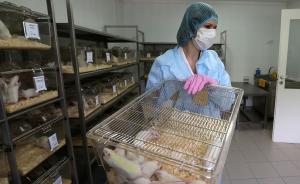 俄罗斯禁止生产和进口转基因食品,违者将处以罚款