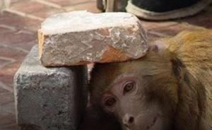 人民日报微博倡议拒绝动物表演:别让它们再受伤害!
