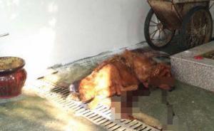 藏獒因饥饿突然撕咬主人20分钟,警方赶到后将其击毙