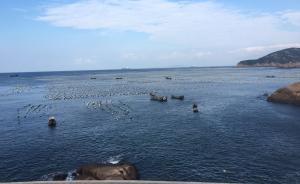 东海无鱼下的嵊泗:休渔难敌捕捞产能,渔民提议全面禁渔两年