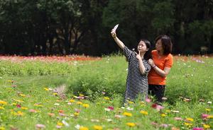 国庆上海各大公园景区主题活动公布:赏花听曲看魔术……