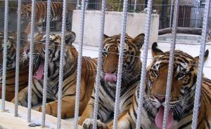 长安街知事:40多部级老虎受审,谁腐败的时间最长?