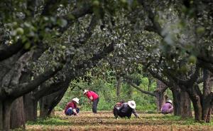 林业局局长谈集体林权制度:盘活集体林资源,林权值钱能贷款