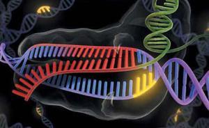 美国科学家发现预防艾滋病毒新型基因,或有助潜在新疗法