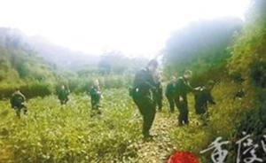 重庆200多斤重野猪偷食庄稼被兽夹夹伤腿,特警一枪击毙