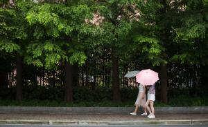 时隔12年上海再次调查适合本地栽种树种,杉类树要多栽多培