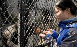 上海动物园女饲养员:这是个特别的春节,我和美洲豹在一起