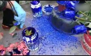 """普通玫瑰秒变""""蓝色妖姬"""",价格贵一倍"""