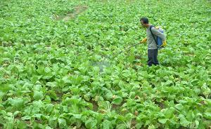 黑龙江:2020年蔬菜种植面积翻番,菜农户均年收入超5万