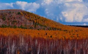 大兴安岭见证国有林场变迁:以前没风现在有了,狍子回来了